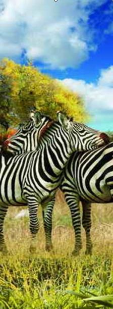 3D Könyvjelzők - Zebrák