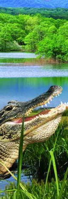 3D Könyvjelzők - Krokodil