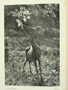 Dr. Cholnoky Jenő - Turisták Lapja 1942. április [antikvár]