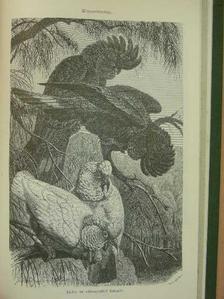 Bernátsky Jenő - Természettudományi Közlöny 1900. január-december [antikvár]