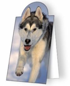 Image State Europe - Husky kutya - Mágneses könyvjelző