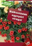 Balkonládák egynyári virágai