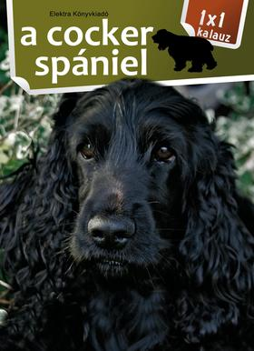 1x1 - A cocker spániel