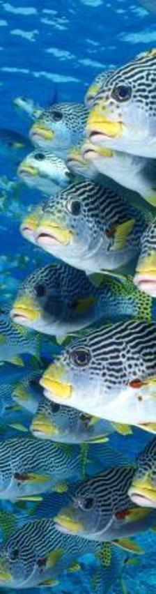 MCA26 - Tengerihalak 3D könyvjelző 200 x 55 mm B