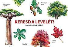 Inca Starzinsky - Keresd a levelét! - Memóriajáték fákkal