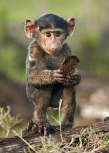 MAF15 - Kis majom 3D képeslap 148 x 105 mm B