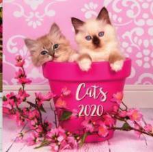 20T0098-002 - CATS LEMEZNAPTÁR - 2020