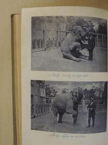 Abonyi Árpád - Pesti Hirlap Naptára az 1913. közönséges évre [antikvár]