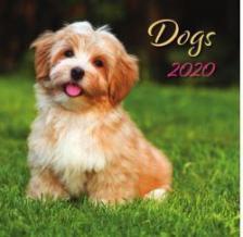 20T0098-0066 - DOGS LEMEZNAPTÁR - 2020