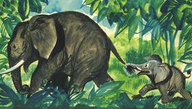 Jumbó, egy kis elefánt kalandjai - Diafilm