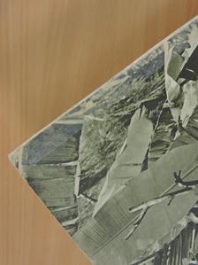 Dr. Diószeghy Dániel - Természettudományi Közlöny 1958. február [antikvár]
