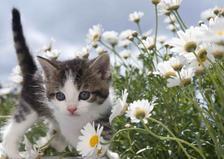 MPS19 - Virág cicával 3D képeslap 148x105mm B