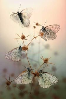 MIS11 - Pillangók 3D képeslap 105 x 148 mm B