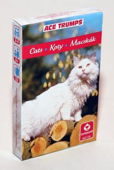 CartaCo kft - 4 az 1-ben / Kedvenceink a cicák kártya