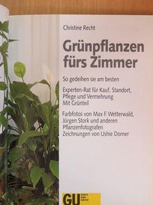 Christine Recht - Grünpflanzen fürs Zimmer [antikvár]