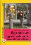 Velich István - V. Nagy Enikő - Egzotikus gyümölcsök csodálatos világa